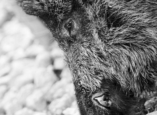 Animal Faces #003, © 2018 Helge Hasenau