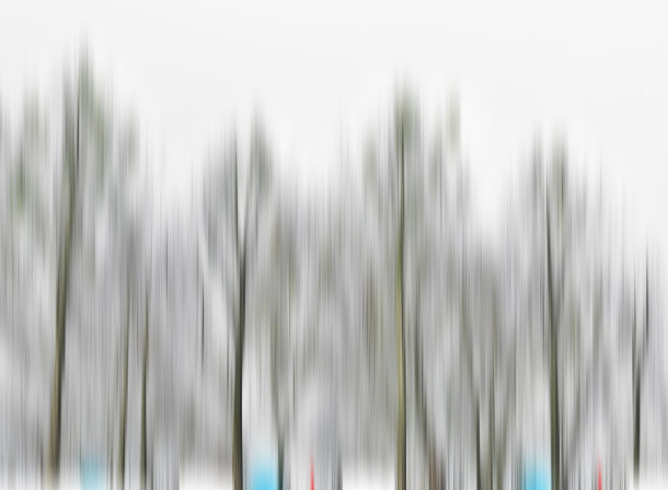 Art of Trees #001, © 2018 Helge Hasenau