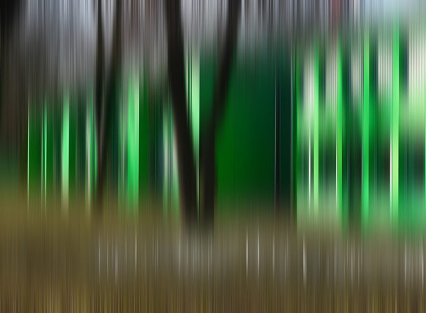 Art of Trees #002, © 2018 Helge Hasenau