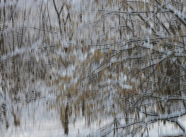Art of Trees #006, © 2018 Helge Hasenau