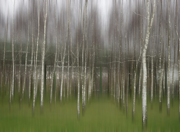 Art of Trees #007, © 2018 Helge Hasenau