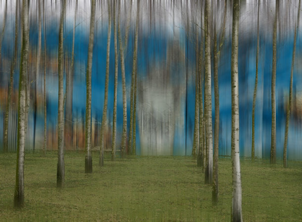 Art of Trees #008, © 2018 Helge Hasenau