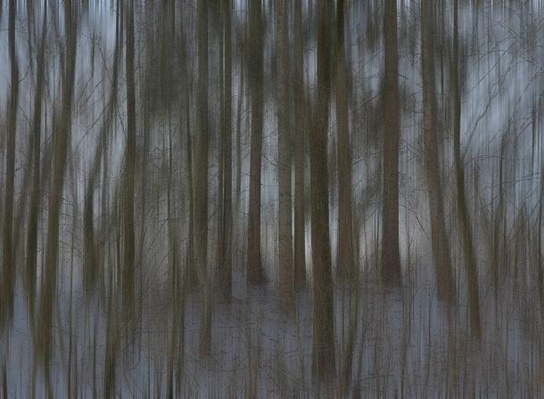Art of Trees #009, © 2018 Helge Hasenau