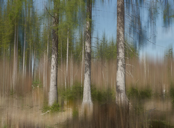 Art of Trees #011, © 2018 Helge Hasenau