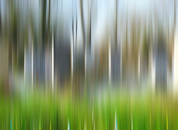 Art of Trees #012, © 2018 Helge Hasenau