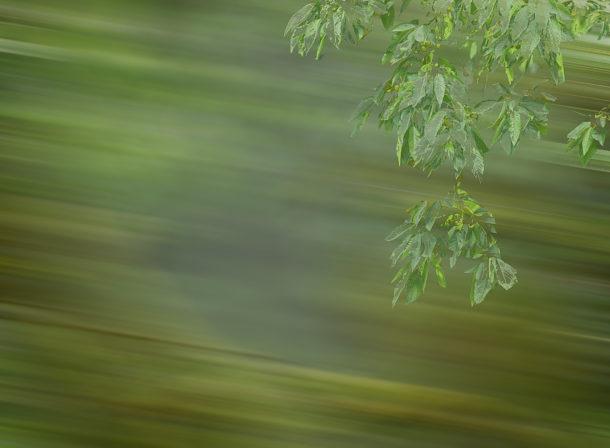 Art of Trees #013, ©2018, Helge Hasenau