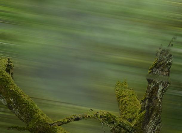 Art of Trees #014, © 2018 Helge Hasenau