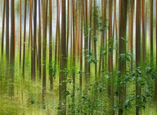 Art of Trees #019, © 2018 Helge Hasenau