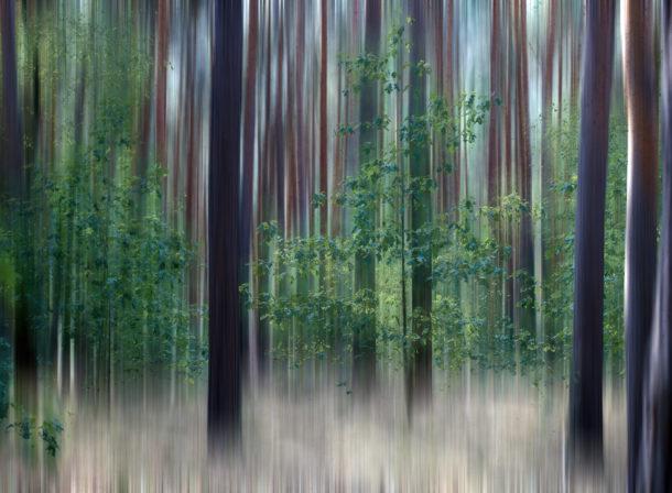 © 2018 Helge Hasenau, Art of Trees #020