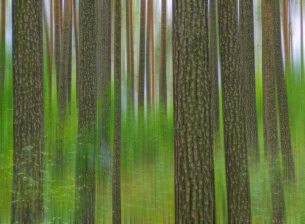 © 2018 Helge Hasenau, Art of Trees #021