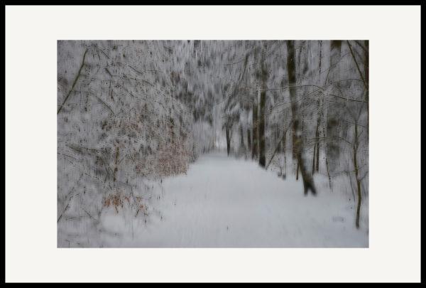 Art of Trees #005