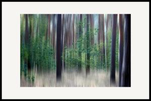 Art of Trees #020