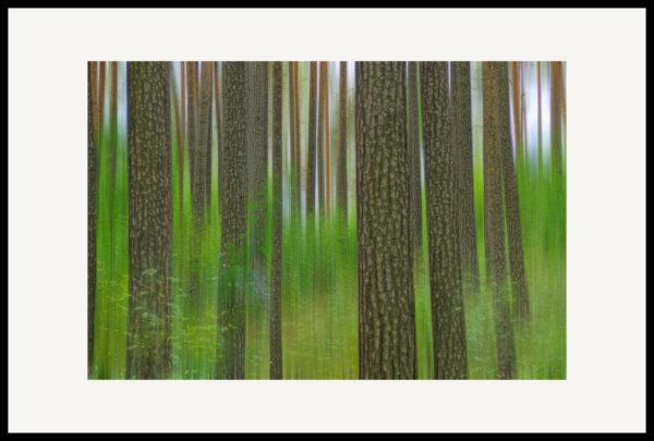 Art of Trees #021