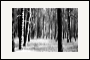 Art of Trees #022